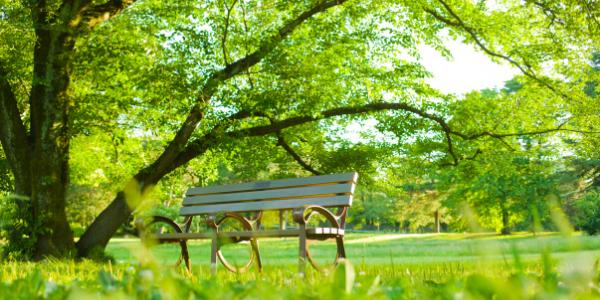 Perinton NY park bench