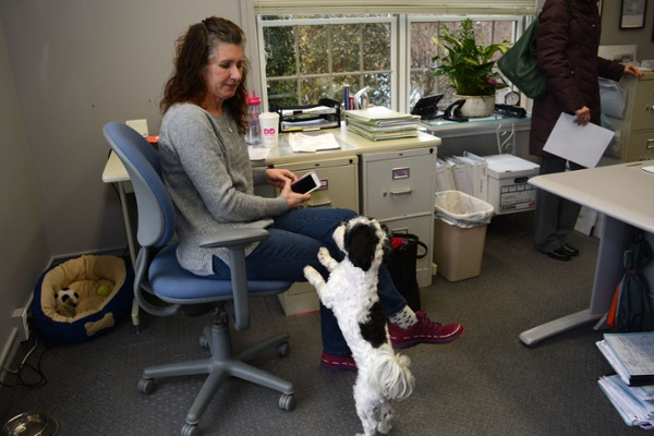 Gerber Homes Office Dog